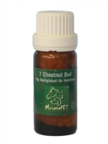 Bachblüten 7 Chestnut Bud Globuli 10g