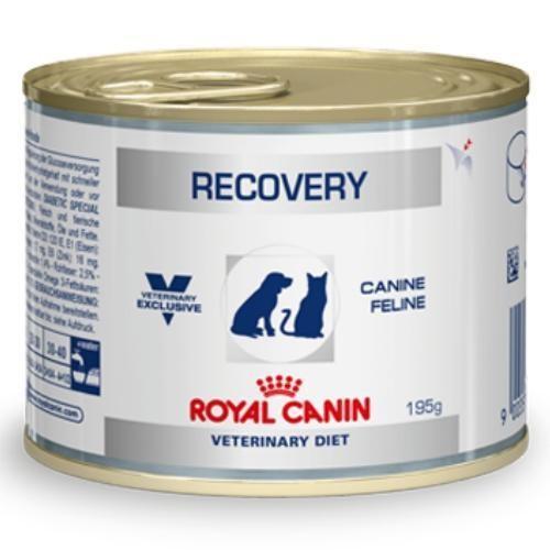 Royal Canin Recovery Hund + Katze feucht